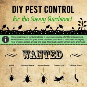 Pest Control Infographic Example